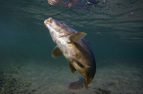 Constitution d'un groupe de travail sur la pêche de la carpe