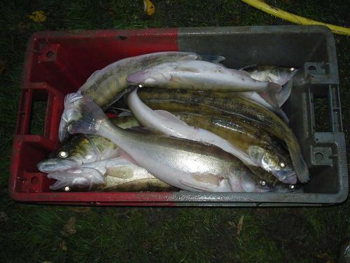 Projet d'installation d'un pêcheur professionnel dans l'Yonne